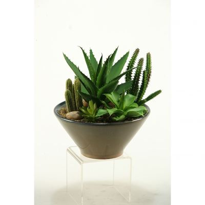 Picture of Succulent In Round Bowl