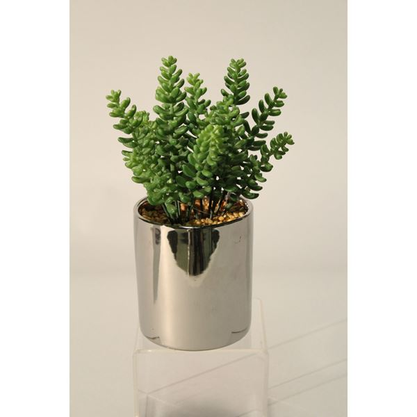 Picture of Succulents In High-Sheen Silver Pot