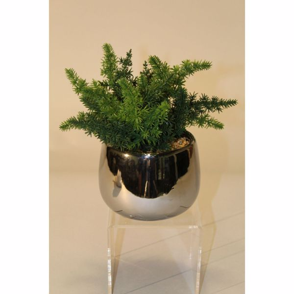 Picture of Fern In High-Sheen Silver Pot