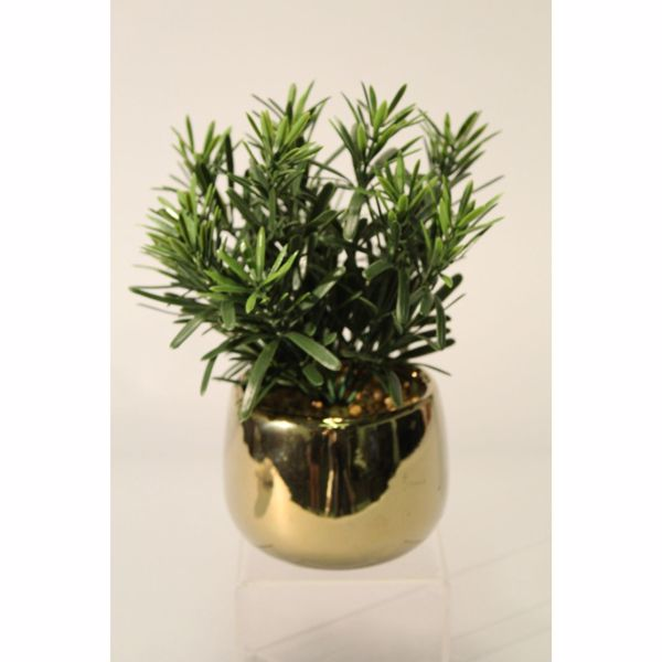 Picture of Pine In High-Sheen Gold Pot