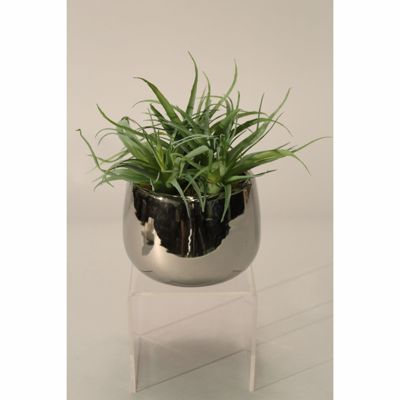 Picture of Air Grass In High-Sheen Silver Pot