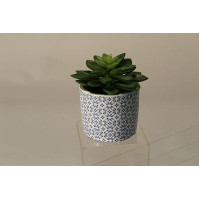 Picture of Succulent In Blue Patterned Pot