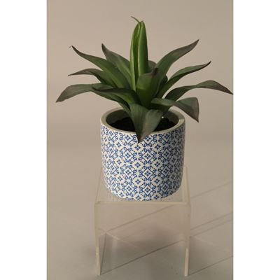 Picture of Aloe In Blue Patterned Pot