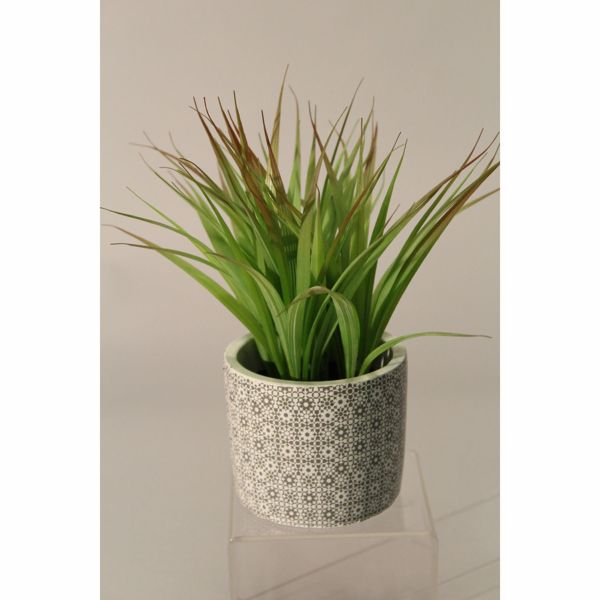 Picture of Grass In Neutral Patterned Pot