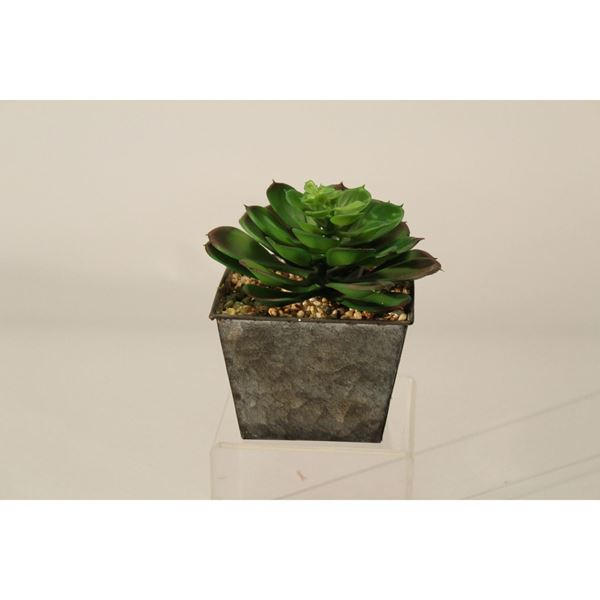 Picture of Echeveria In Metal Planter
