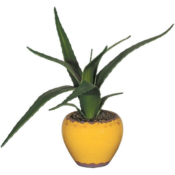 0092687_15in-succulent-in-ceramic.jpeg