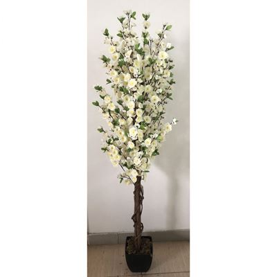 Picture of White Blossom Tree