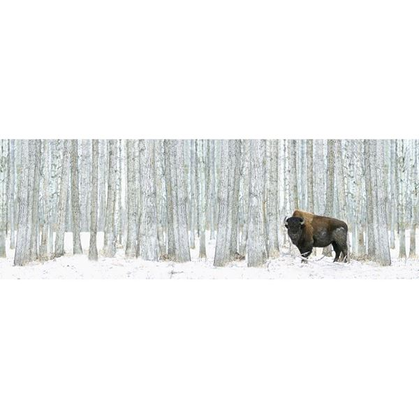 Picture of Buffalo in Trees Canvas 36x12
