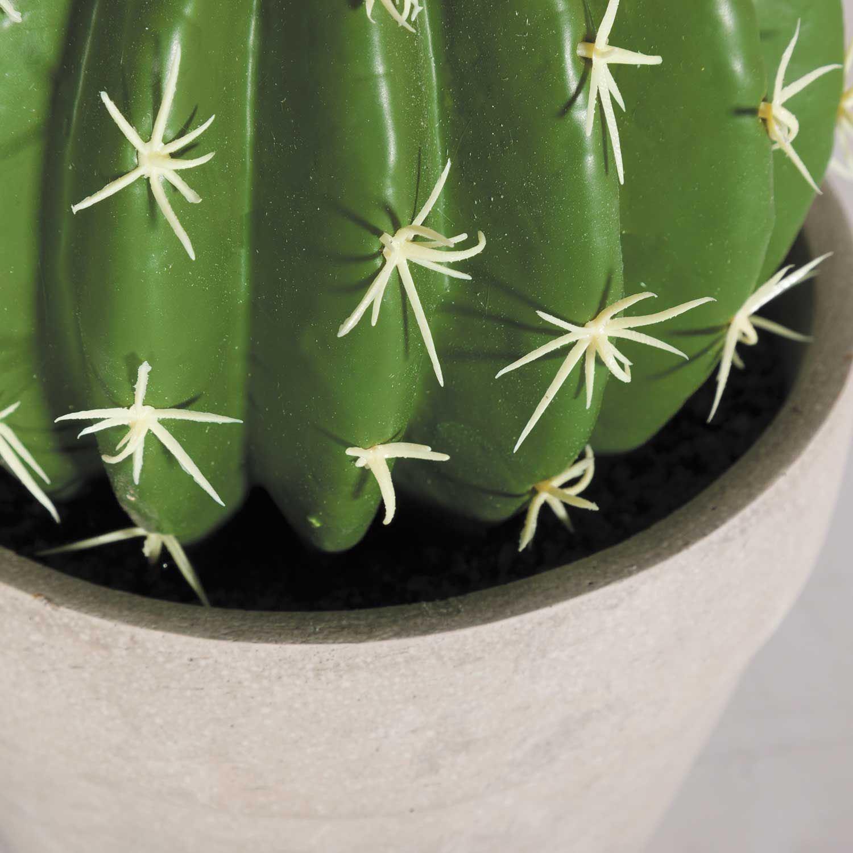 Picture of Round Cactus