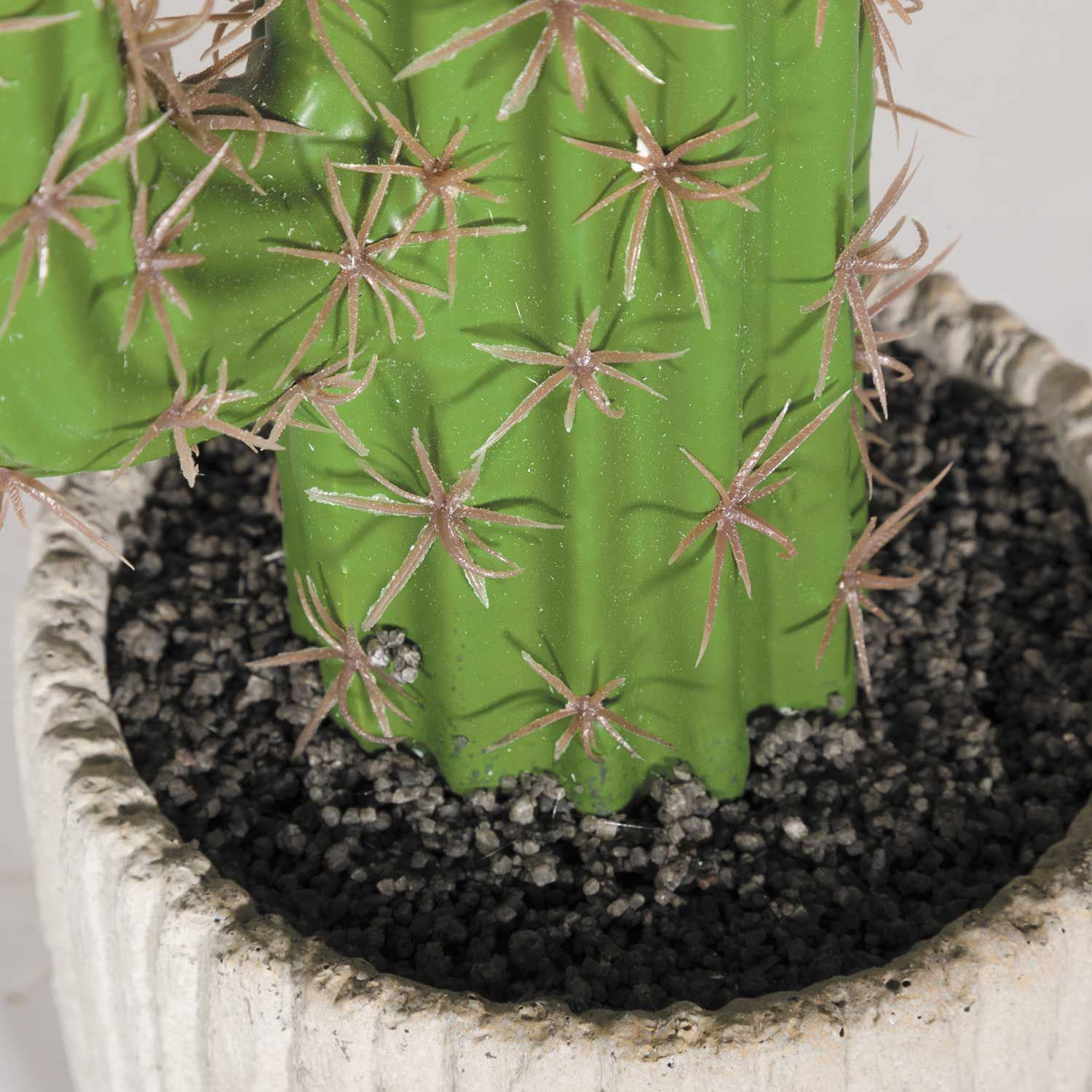 Picture of Tall Cactus