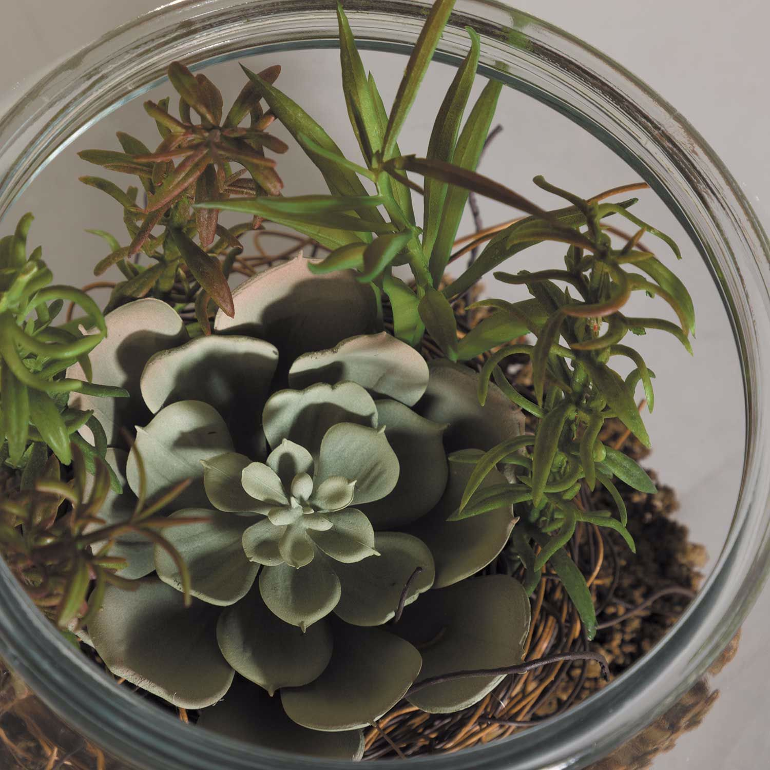 Picture of Succulent In Round Glass