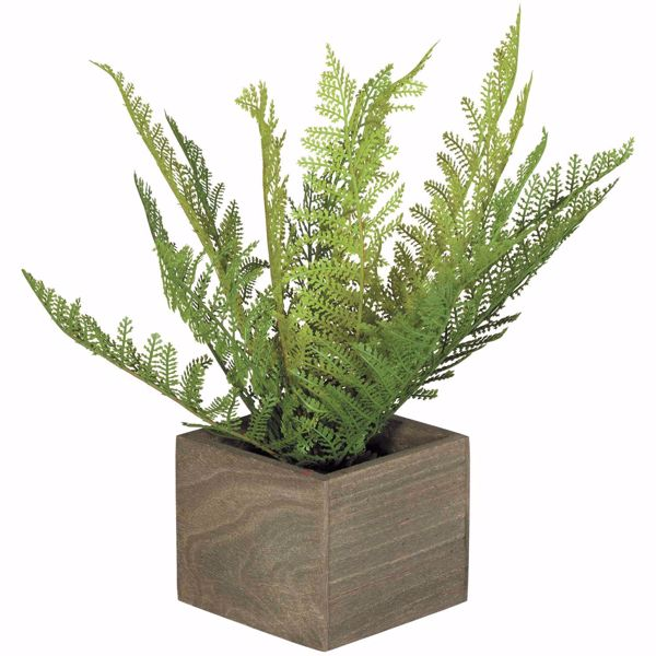 Picture of Ferns In Square Box