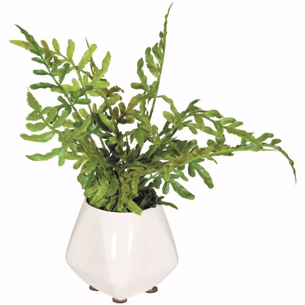 Picture of Ferns In Ivory Vase