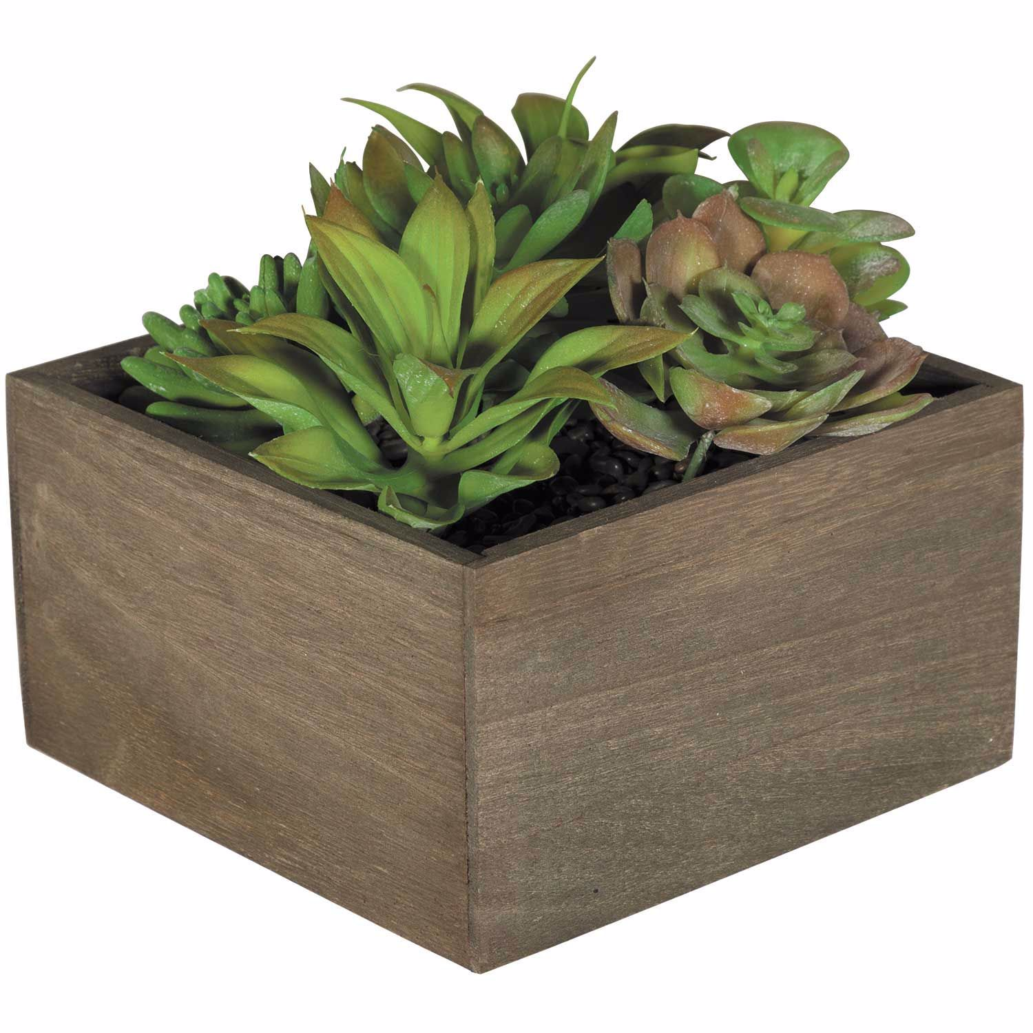 Picture of Succulents In Square Box