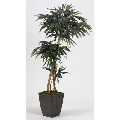Picture of 2 Branch Weeping Ficus Tree