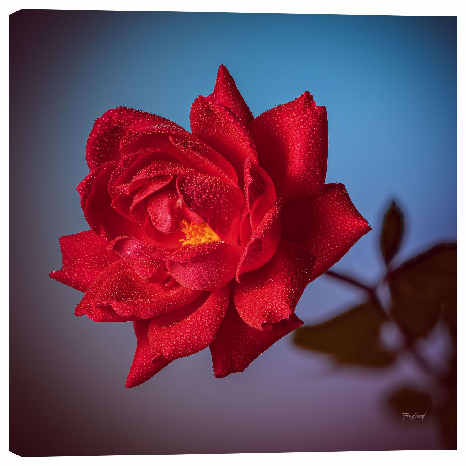 Picture of Lipstick Red Rose 24x24 *D