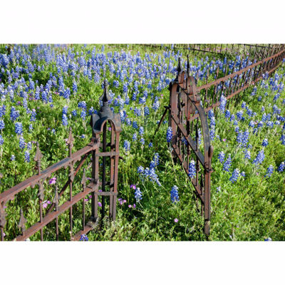 Picture of Iron Fence Blue Flower 24x36 *D