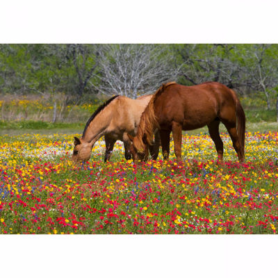 Picture of Grazing Horses 32x48 *D