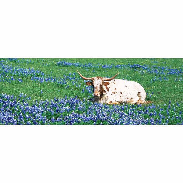 Picture of Resting Steer 20x60 *D
