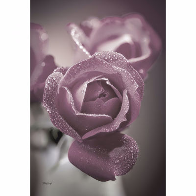Picture of Dusty Rose Buds 36x24 *D