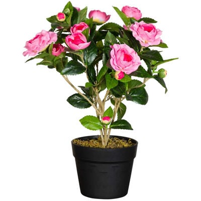 Picture of Camellia Plant