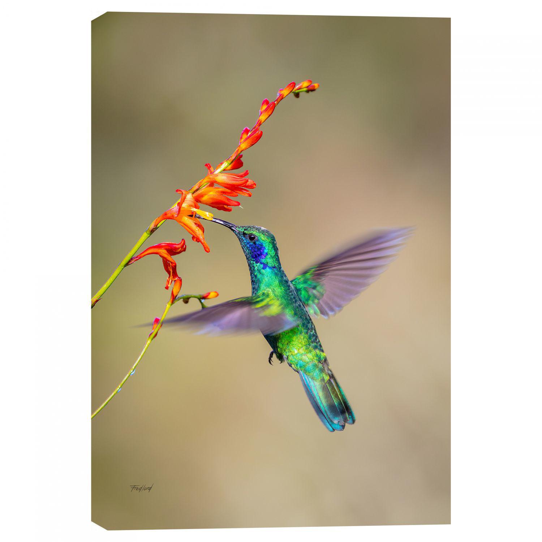 Picture of Fluttering Hummingbird 24X16 *D