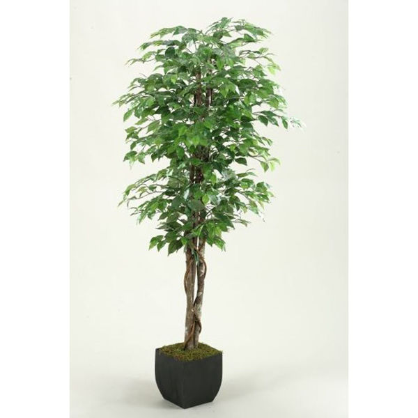 Picture of Green Ficus Tree 72 Inch With Metal