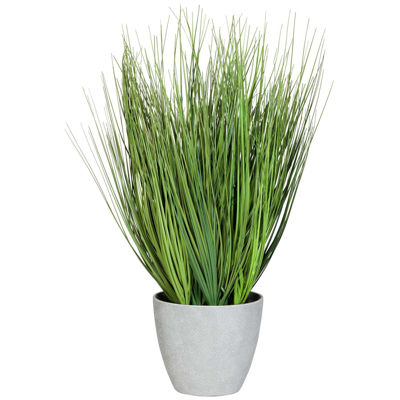 Picture of Onion Grass in Round Grey Pot