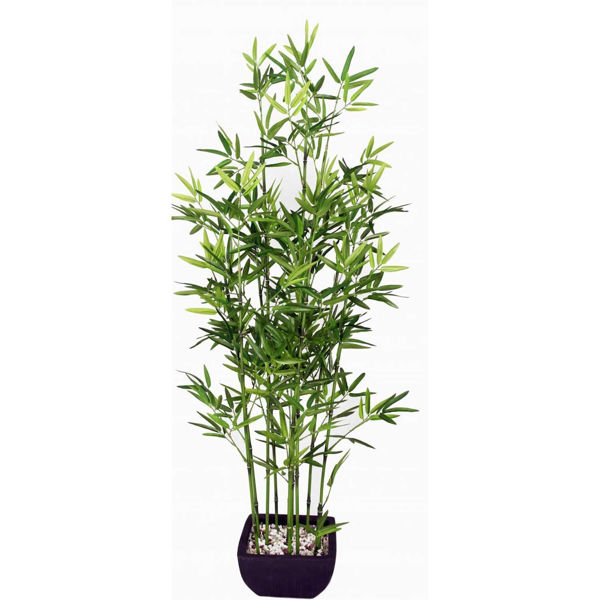 Picture of Bamboo in Black Terra Pot