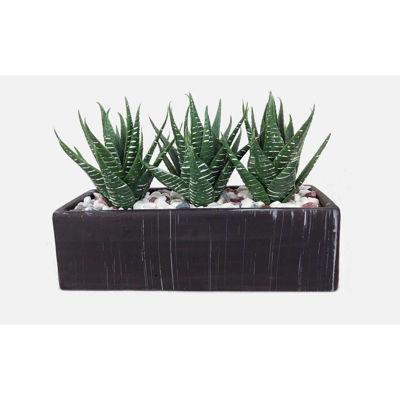 Picture of Aloe in Rectangular Pot