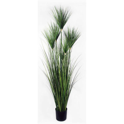 Picture of 6 Foot Onion Tree In Plastic Pot