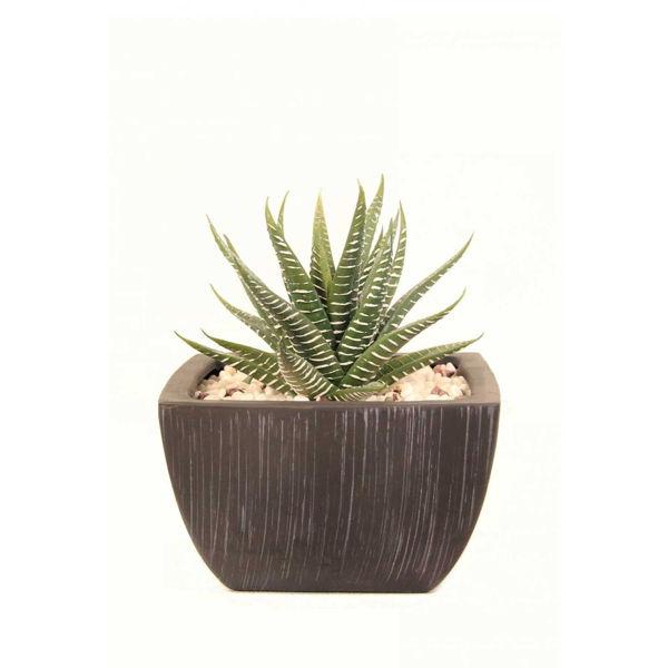 0126302_aloe-in-black-square-terra-pot.jpeg