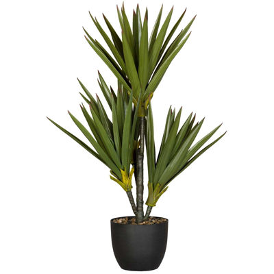 Picture of 4 Stem Plant