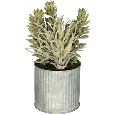 Picture of Succulent In Galvanized