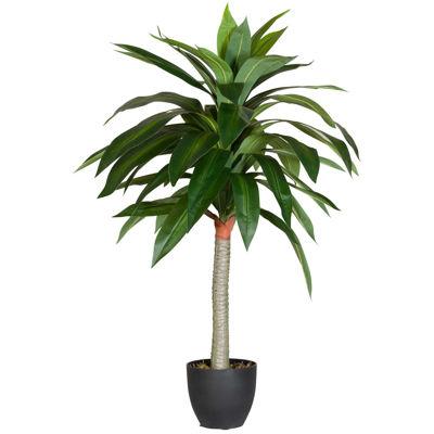 Picture of Dracaena Tree