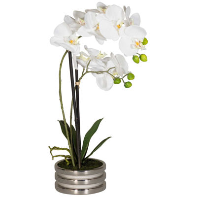 Picture of White Orchids