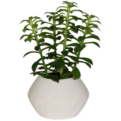 Picture of Green Plant In Round White Container